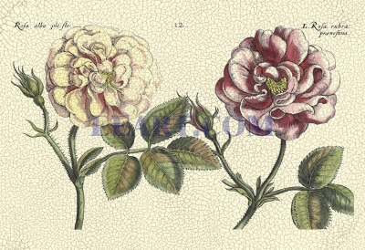 Crackled DePasse Elephant Roses I