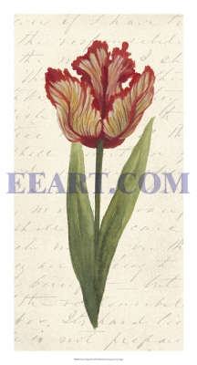 Twin Tulips II
