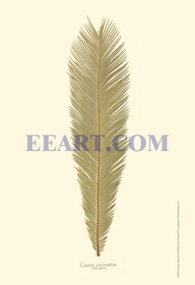 Small Sago Palm I