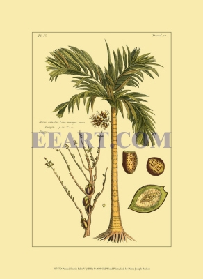 Printed Exotic Palm V
