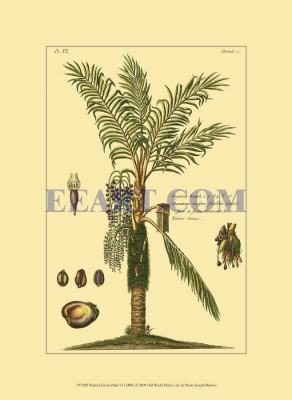 Printed Exotic Palm VI
