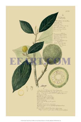 Descubes Tropical Fruits I
